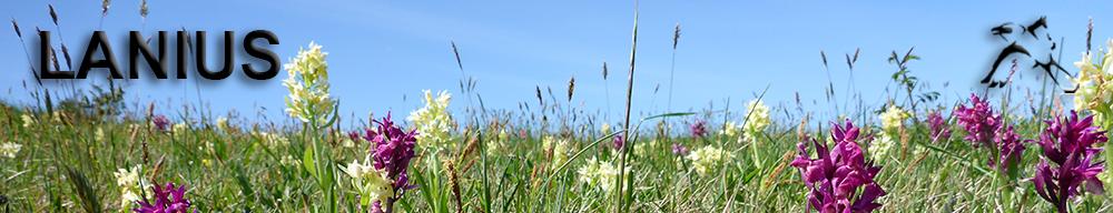 Forschungsgemeinschaft für regionale Faunistik und angewandten Naturschutz
