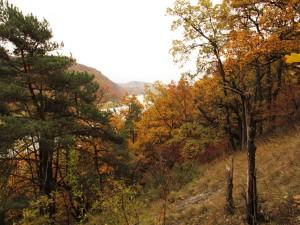 Flaumeichenwald bei Spitz