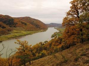 Flaumeichenwald bei Spitz1